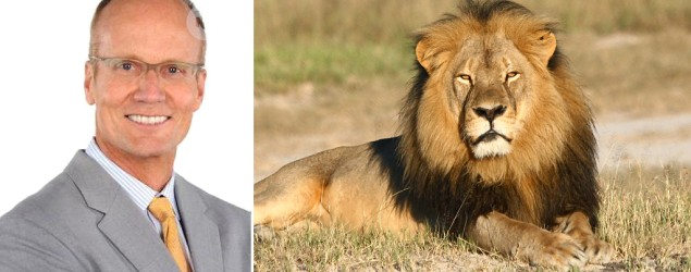 Walter James Palmer paid about $50,000 to hunt Zimbabwe lion. (AP)