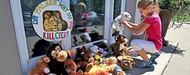 Safari Club International suspends Walter James Palmer for killing Cecil the lion. (AP)