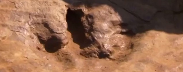 Rare dinosaur footprints found in Germany