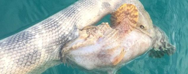 Schlange und Fisch (Bild: Yahoo UK)