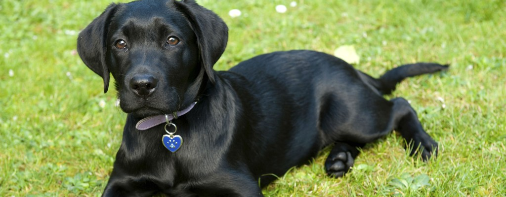 Labrador/Getty Images
