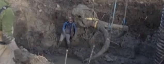 Mammut (Euronews)