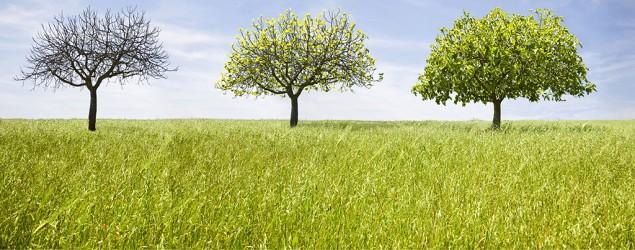تاثیر فصلها بر خلقیات ما