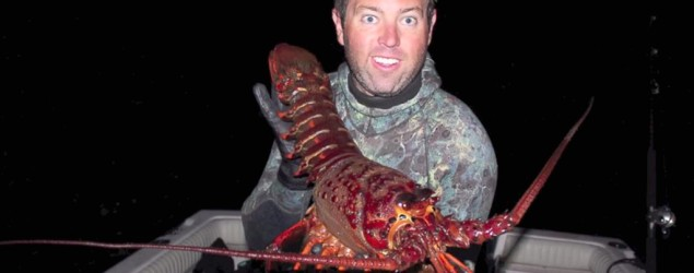 Fisherman Forrest Galante catches a giant lobster. (ABC News)