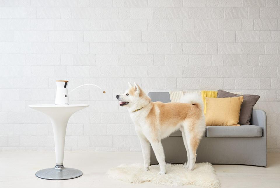 <p>Encourage the doting pet mom in your life to go out more with the <span>Furbo Dog Camera</span> ($162). The device lets her communicate with her dog or cat while away from home and lets her check in via a video feed while she's on the go. Oh, and did we mention it can give the pet treats, too?</p>