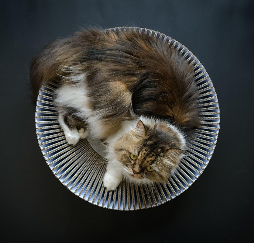 """<p>Why buy a humdrum cat bed when you can have a modern-looking one that scratches your pet's back, too? This bowl-shaped cat lounge is constructed of over 100 corrugated panels that shift when your cat rubs their back against them—so it feels like they're getting a real back rub.</p> <p><strong><em>Shop Now</em></strong><strong>: </strong><em>KATRIS Nest, $49</em><em>, </em><a href=""""https://shop.katriscat.com/products/katris-nest-1"""" rel=""""nofollow noopener"""" target=""""_blank"""" data-ylk=""""slk:shop.katriscat.com"""" class=""""link rapid-noclick-resp""""><em>shop.katriscat.com</em></a><em>. </em></p>"""