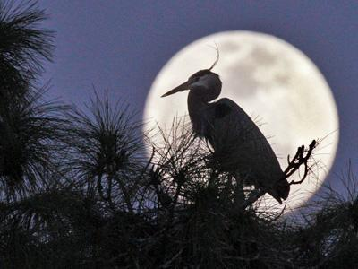 The biggest and brightest full moon of the year, a supermoon, will appear Saturday in the night sky.  Odds are you won't notice anything out of the ordinary.  Experts debunked the myth of lunar phases causing lunatic behavior long ago.  (May 4)