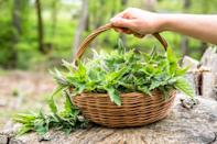 "<p>Springtime means foraging time, and we urge you not to forgo nettles just because they are prickly and can literally sting you if you're not careful. Though these may burn when raw, after being cooked, nettles make an earthy, tangy, nutritious addition to a number of recipes. We like to highlight them by <a href=""https://www.thedailymeal.com/best-recipes/nettle-kale-gnudi?referrer=yahoo&category=beauty_food&include_utm=1&utm_medium=referral&utm_source=yahoo&utm_campaign=feed"" rel=""nofollow noopener"" target=""_blank"" data-ylk=""slk:cooking them in a homemade gnudi"" class=""link rapid-noclick-resp"">cooking them in a homemade gnudi</a>.</p>"
