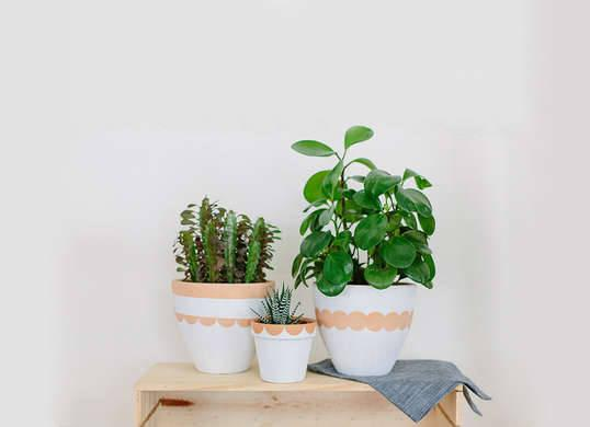 """<p>To spruce up ordinary <a href=""""http://www.bobvila.com/slideshow/buy-or-diy-7-hanging-planters-for-the-great-indoors-48670"""" title=""""hanging-planters"""">planters</a> into these two-tone, scalloped-edge pots, raid the craft closet for acrylic paint, circular stickers, and a paint brush. After adhering halved stickers to the edge of each pot, paint and then peel the stickers off to reveal a melting pot of colors!<i>Photo: <a href=""""http://apairandasparediy.com/2015/05/diy-scalloped-painted-pots.html"""" title=""""http://apairandasparediy.com/2015/05/diy-scalloped-painted-pots.html"""">apairandasparediy.com</a><br /></i><b>RELATED: <a href=""""http://www.bobvila.com/slideshow/10-crazy-new-ways-to-bring-the-garden-indoors-49690"""" title=""""http://www.bobvila.com/slideshow/10-crazy-new-ways-to-bring-the-garden-indoors-49690"""">10 Crazy New Ways to Bring the Garden Indoors</a></b></p>"""