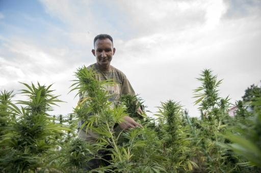 Morocco has long been a leading producer and exporter of hashish -- refined cannabis resin -- even though the production, sale and consumption of drugs is illegal in the country