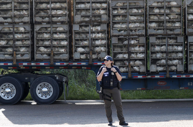 A trailer loaded with chickens passes a federal agent outside a Koch Foods Inc., plant in Morton, Miss. Wednesday, Aug. 7, 2019. U.S. immigration officials raided several Mississippi food processing plants on Wednesday and signaled that the early-morning strikes were part of a large-scale operation targeting owners as well as employees. (AP Photo/Rogelio V. Solis)