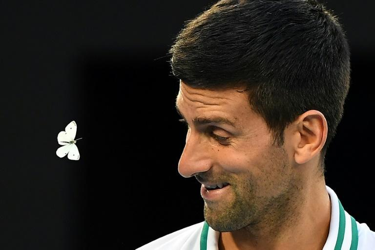 Novak Djokovic deals with a butterfly during his semi-final against Aslan Karatsev