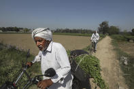 Indian farmer Dilbagh Singh returns homewards after harvesting fresh peas from his farm in village Samrodha, in the northern Indian state of Haryana Friday, March 5, 2021. Saturday marks 100 days of the ongoing farmer protests against the contentious new agricultural reform laws which have led tens of thousands of farmers to blockade key highways leading to the capital. Multiple rounds of talks have failed to produce any breakthrough on the farmers' key demand to revoke the legislation. (AP Photo/Manish Swarup)