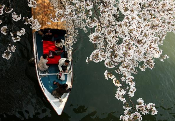 OSAKA, JAPAN - APRIL 09:  People row a boat under cherry blossoms at Sakuranomiya Park on April 9, 2012 in Osaka, Japan. (Photo by Buddhika Weerasinghe/Getty Images)