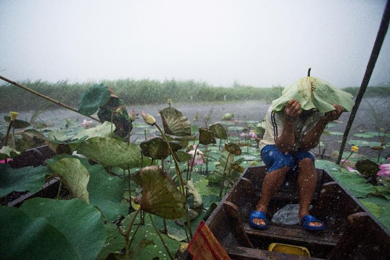 A local tourist guide uses a lotus leaf to shield his head during a summer storm on a lake in the Khao Sam Roi Yot national park in southern Thailand (AFP Photo/Roberto SCHMIDT)