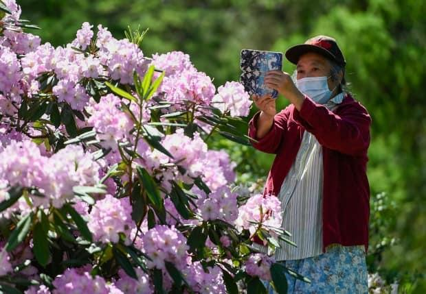 A person takes a photo of flowers at the Dominion Arboretum in Ottawa on May 30, 2021.