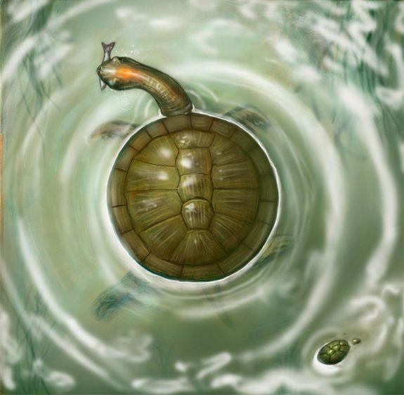 The round shape of a new species of fossil turtle, reported July 11, 2012, and found in Cerrejon coal mine in Colombia, would have meant more surface area to be warmed by the sun.