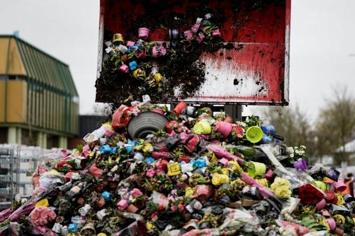 Between 70 and 80 percent of the Netherlands' total annual production of flowers is being destroyed, a huge blow in a country where tulips are as much a symbol of national identity as windmills, cheese and clogs (AFP Photo/Kenzo TRIBOUILLARD)