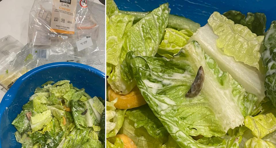 A slug is clearly visible in the salad bowl.
