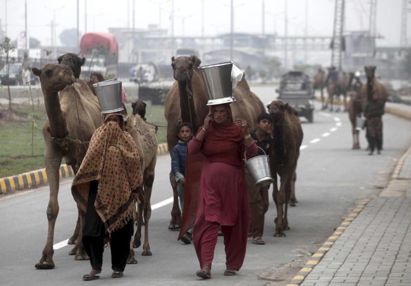 Pakistani nomadic women carry camel milk in pails, as they escort their herd in Peshawar, Pakistan, Wednesday, Nov. 13, 2019. Milk sellers believe that camel milk cures many diseases including diabetes and renal failure. (AP Photo/Muhammad Sajjad)