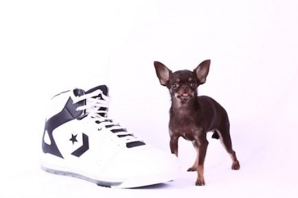 """<div class=""""caption-credit"""">Photo by: Guinness World Records</div><div class=""""caption-title""""></div><b>Smallest Dog</b> <br> The smallest dog living, in terms of height, is a <a rel=""""nofollow"""" href=""""http://www.youtube.com/watch?v=m4tmGus4T9M"""" target=""""_blank"""">female Chihuahua called Milly</a>, who measured 9.65 cm. (3.8 in.) tall on February 21, 2013 and is owned by Vanesa Semler of Dorado, Puerto Rico. <br> <i>Image: Guinness World Records</i>"""