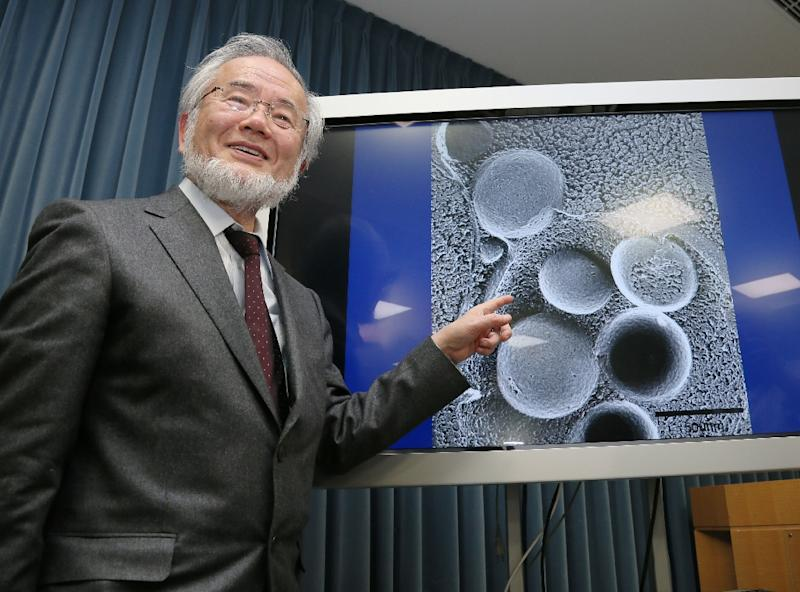 Out Of The Limelight Nobel Medicine Prize Winner Ohsumi