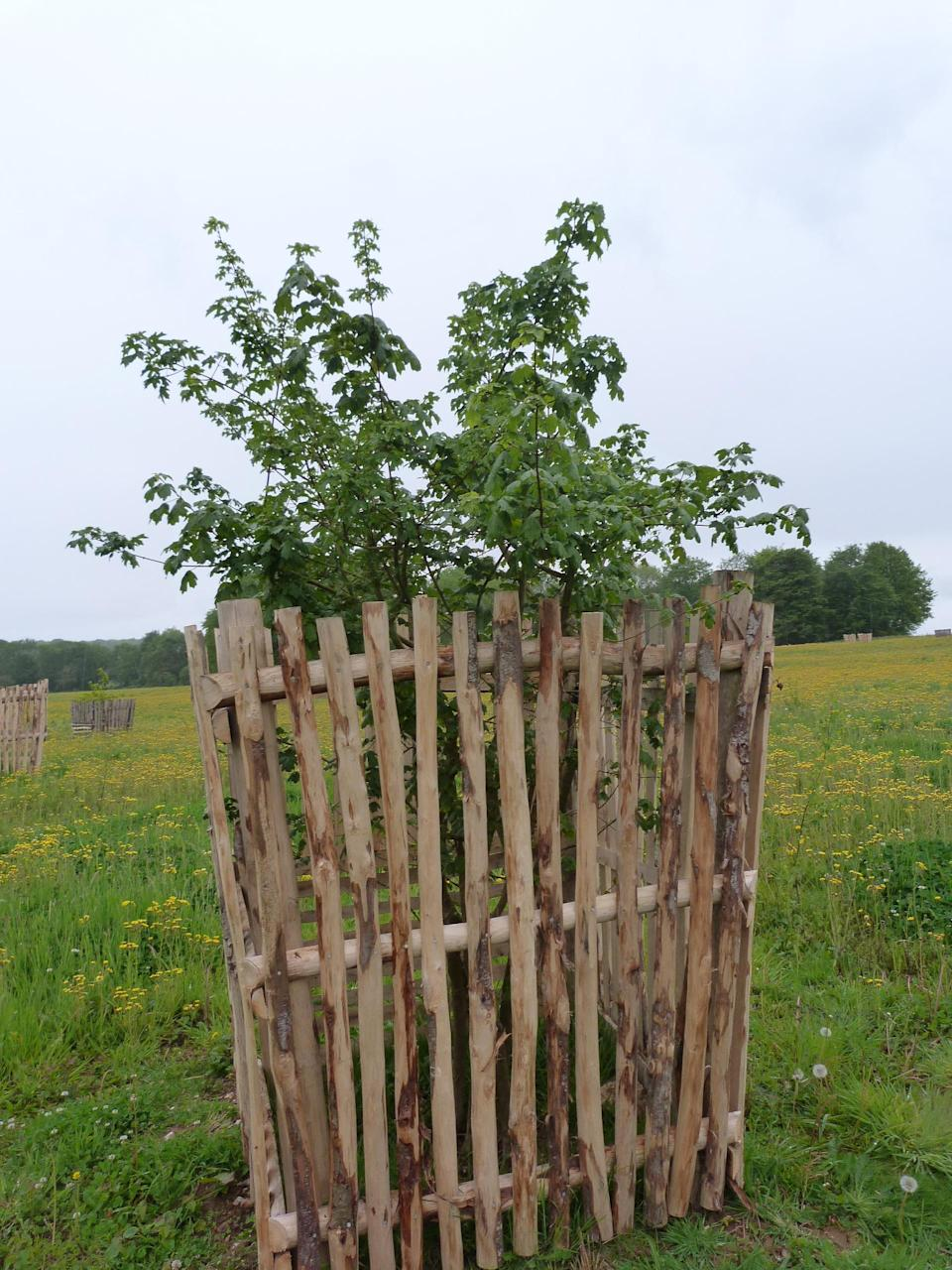 Chestnut crates protected young trees on the South Downs (National Trust/PA)