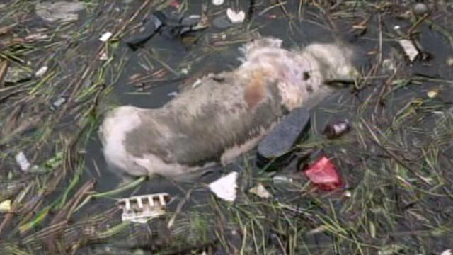 Officials insist drinking water is safe despite grisly discovery in the Huangpu River.