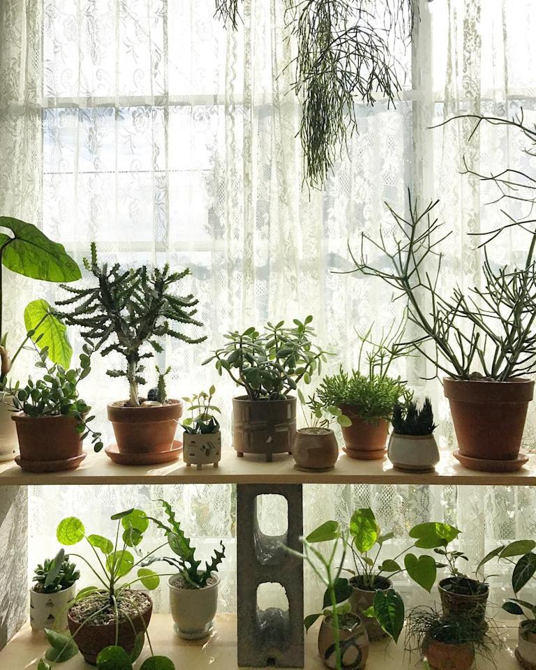 6 Ways To Turn Your House Into A Productive Home Environment: Put These Plants In Your Bedroom For The Best Sleep Ever