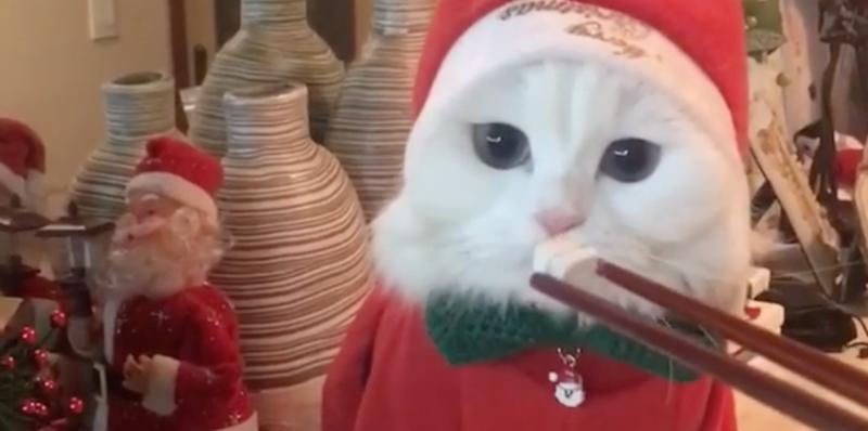 This cat dressed as Santa while using chopsticks is livings its best life