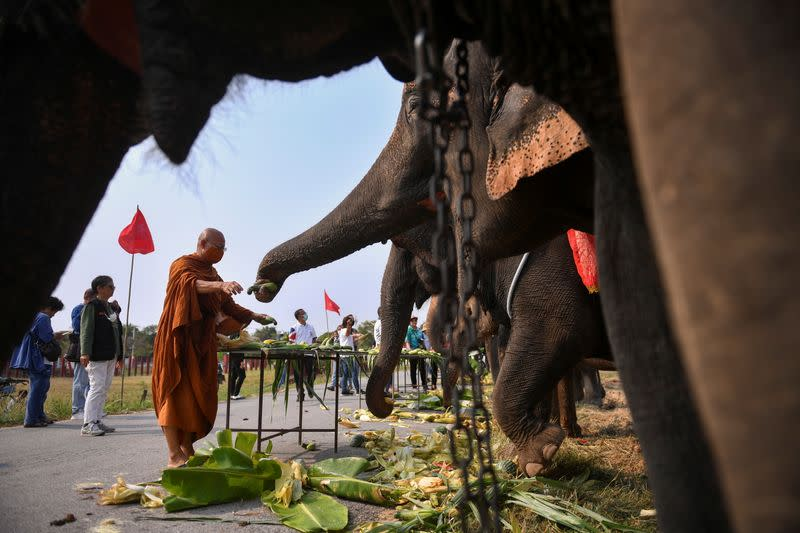 Thailand's National Elephant Day celebration in the ancient city of Ayutthaya