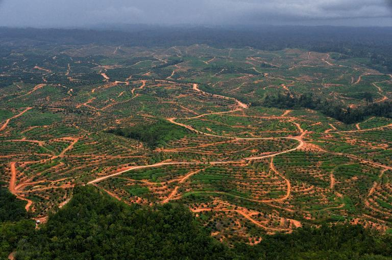 Conservationists are urging the Indonesian government to listen to business and start taking deforestation seriously after a major paper giant joined the growing ranks of companies pledging to stop clearing forests