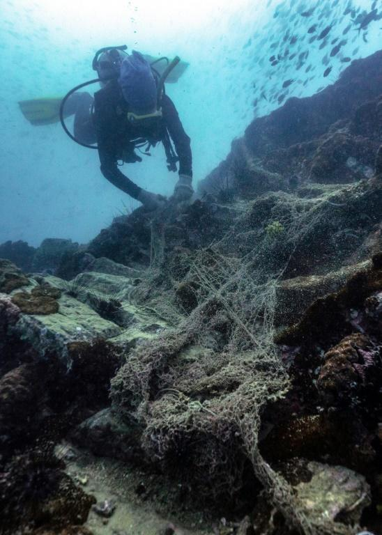 Net Free Seas aims to prove that protecting sea creatures can be commercially viable in Thailand