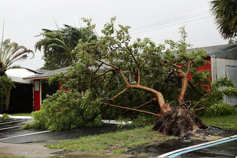 A collapsed tree in Fort Lauderdale, Florida.
