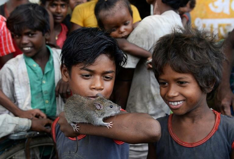 """""""Governments may have changed but nothing has changed for us. We still eat, live and sleep as our ancestors,"""" one Musahar told AFP as he took the roasted rat off the fire and poked the tender meat"""