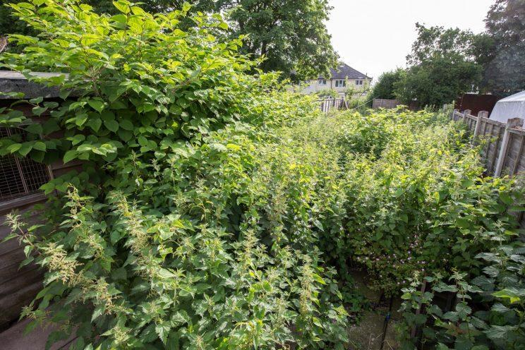 The garden first came under siege in 2012 (Caters)