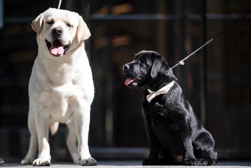 Previous tests have shown dogs are able to detect the odours of certain diseases, including some cancers, diabetes and malaria (AFP Photo/Johannes EISELE)