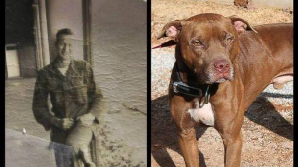 Mysterious Black and White Photo Found in Stray Dog's Collar
