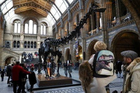 Visitors look a Dippy the diplodocus at the Natural History Museum in London, Britain January 4, 2017. REUTERS/Stefan Wermuth
