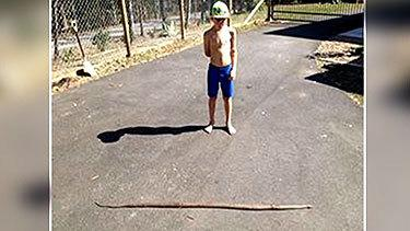<p>Dog protects kids by fighting off snake</p>