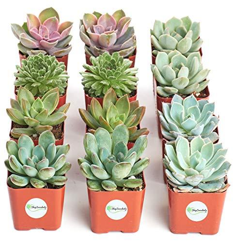 "<p><strong>Shop Succulents</strong></p><p>amazon.com</p><p><strong>$29.99</strong></p><p><a href=""http://www.amazon.com/dp/B01LXDV96N/?tag=syn-yahoo-20&ascsubtag=%5Bartid%7C10055.g.28396690%5Bsrc%7Cyahoo-us"" target=""_blank"">Shop Now</a></p><p>Why buy *one* succulent when you can buy twelve? We're loving this Amazon pick as a present for coworkers.</p>"