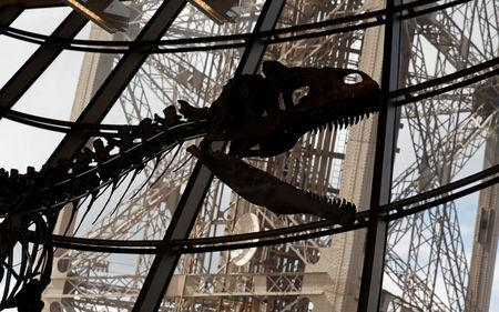 A dinosaur fossil is on display at the Eiffel tower, in Paris, France, June 2, 2018 ahead of its auction on Monday. REUTERS/Philippe Wojazer