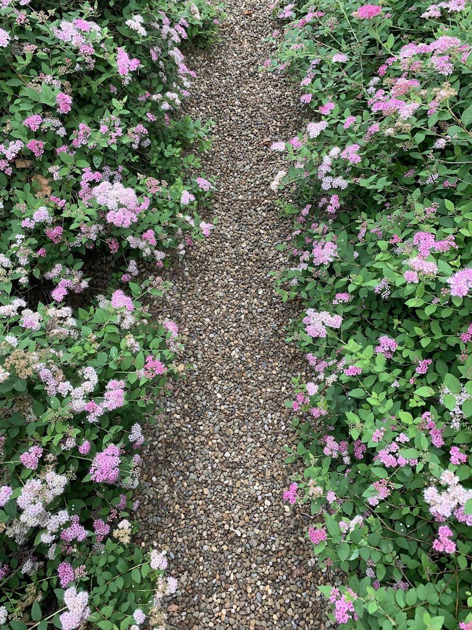 """<p>When it comes to paths and patios, gravel is a much more affordable surface than paving. To lay it in place; mark out the area, then scrape away loose soil or grass, pin down a permeable membrane to stop the weeds coming through and spread the gravel over it. Aim for a depth of 2.5cm. You can choose a pale gravel, like Honey Stone, to contrast with your lawn and planting. A large bag will cover around 20 sq metres.</p><p><strong>• </strong>Head to <a href=""""https://go.redirectingat.com?id=127X1599956&url=https%3A%2F%2Fwww.homebase.co.uk%2Fgarden-outdoor%2Ffencing-decking-landscaping%2Fdecorative-stone-gravel-chippings.list&sref=https%3A%2F%2Fwww.redonline.co.uk%2Finteriors%2Feditors_choice%2Fg35933369%2Fgarden-ideas-on-a-budget%2F"""" rel=""""nofollow noopener"""" target=""""_blank"""" data-ylk=""""slk:Homebase"""" class=""""link rapid-noclick-resp"""">Homebase</a>, <a href=""""https://go.redirectingat.com?id=127X1599956&url=https%3A%2F%2Fwww.diy.com%2Fdepartments%2Foutdoor-garden%2Fstone-gravel-chippings%2FDIY592562.cat%23Icamp%3DNav_Garden_DIY592562&sref=https%3A%2F%2Fwww.redonline.co.uk%2Finteriors%2Feditors_choice%2Fg35933369%2Fgarden-ideas-on-a-budget%2F"""" rel=""""nofollow noopener"""" target=""""_blank"""" data-ylk=""""slk:B&Q"""" class=""""link rapid-noclick-resp"""">B&Q</a> or <a href=""""https://go.redirectingat.com?id=127X1599956&url=https%3A%2F%2Fwww.wickes.co.uk%2F&sref=https%3A%2F%2Fwww.redonline.co.uk%2Finteriors%2Feditors_choice%2Fg35933369%2Fgarden-ideas-on-a-budget%2F"""" rel=""""nofollow noopener"""" target=""""_blank"""" data-ylk=""""slk:Wickes"""" class=""""link rapid-noclick-resp"""">Wickes</a> for all your gravel needs!<strong><br><br><br></strong></p>"""