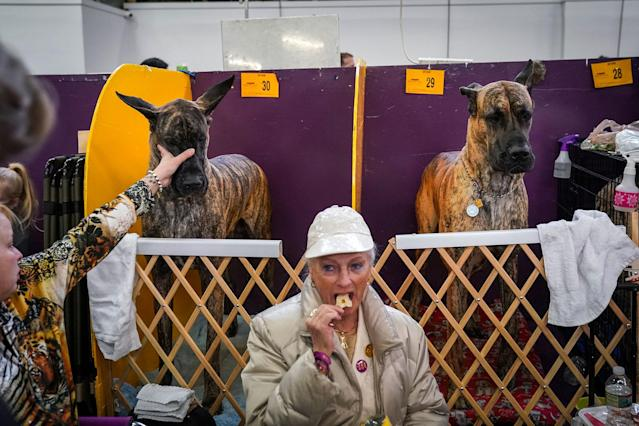 <p>Two great Danes sit in the benching area at the 142nd Westminster Kennel Club Dog Show at The Piers on Feb. 13, 2018 in New York City. (Photo: Drew Angerer/Getty Images) </p>