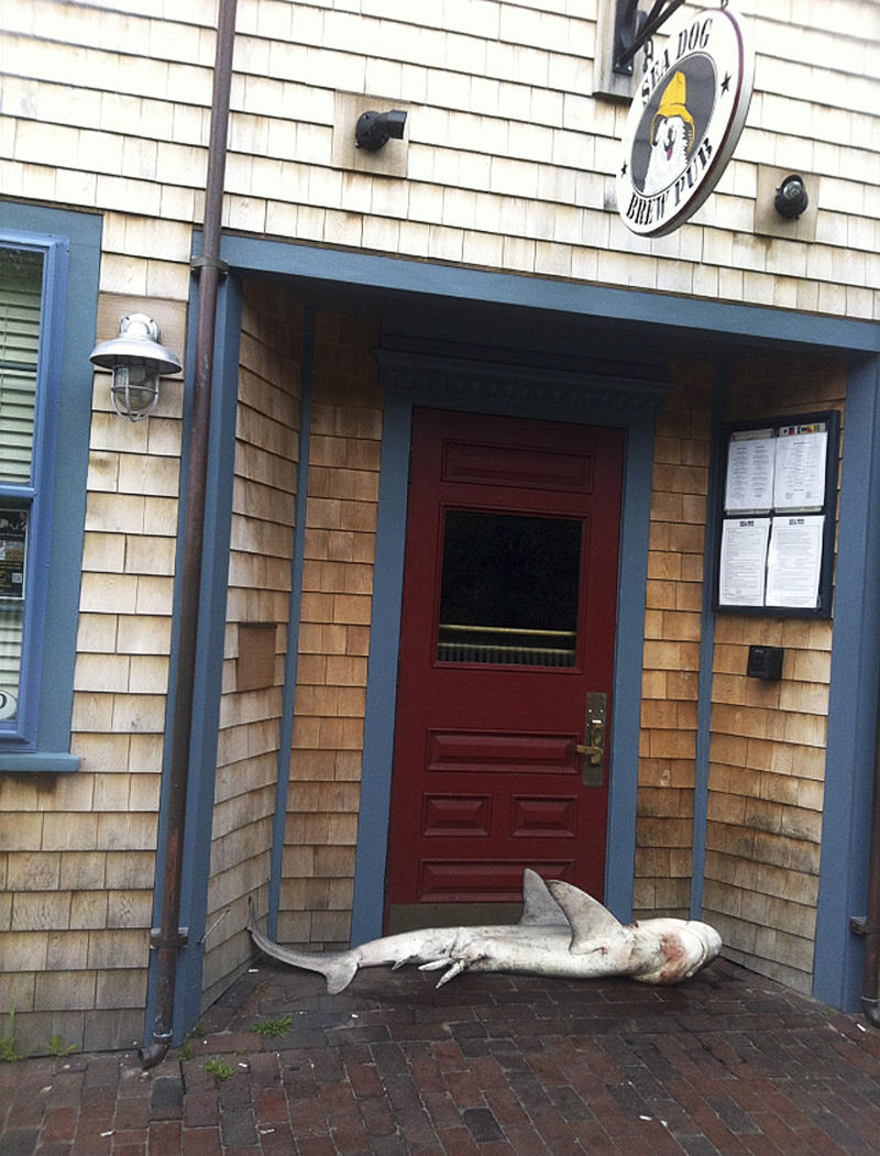 In This Photo Provided By Pub Manager Jimmy Agnew, A Dead Shark Lies At The  Entrance Of The Sea Dog Brew Pub Thursday Morning, Aug. 1, 2013 In  Nantucket, ...