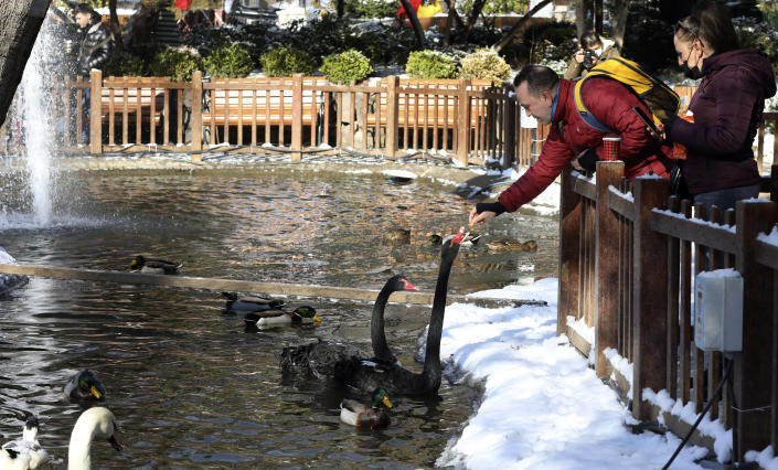 A man feeds swans at the snow-covered Kugulu Park public garden, in Ankara, Turkey, Monday, Jan. 18, 2021. Winter storms and snowfalls remains in effect for a large swath of Turkey, causing road accidents and closure of roads between cities and villages in many regions, hours after the snow falls blanketed the country. (AP Photo/Burhan Ozbilici)