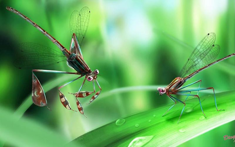An artist's impression of the moments leading up to the insect's death - Credit: Daran Zheng