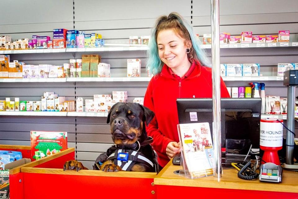 Pet shop chain Jollyes is looking to expand (Jollyes)