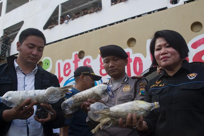 Police and customs officials hold rare Indonesian yellow-crested cockatoos, jammed inside plastic water bottles, confiscated from an alleged wildlife smuggler, on May 4, 2015 (AFP Photo/-)