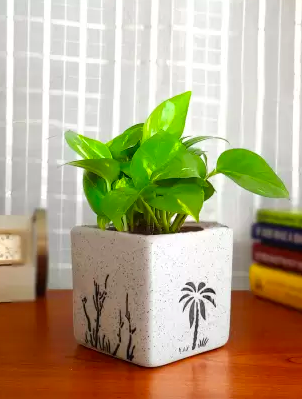 Shop: 6 houseplants to add a bit of nature in your home